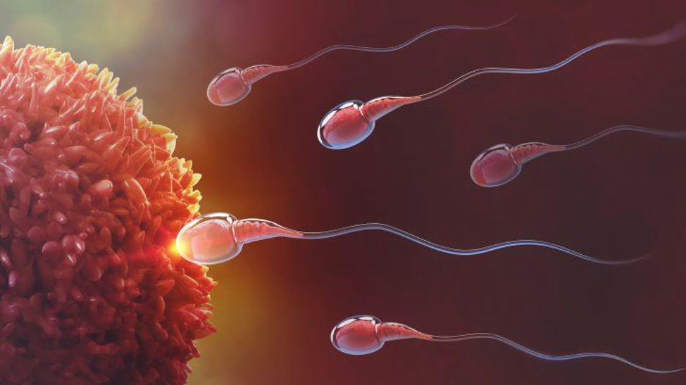 How does MTHFR affect your fertility?5