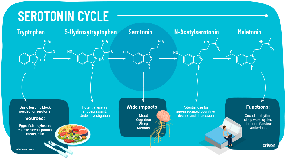 Serotonin Cycle