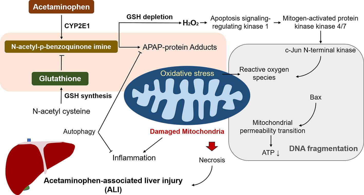 acetaminophen-associated liver injury
